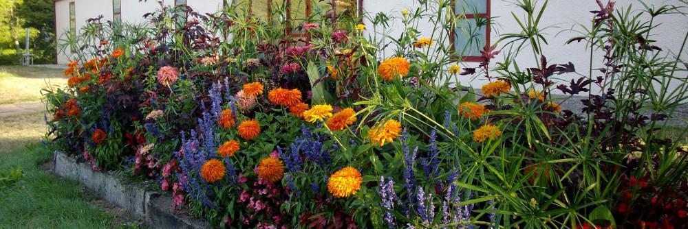 Concours des jardins fleuris